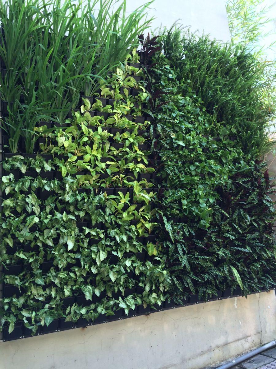 Vườn trên tường