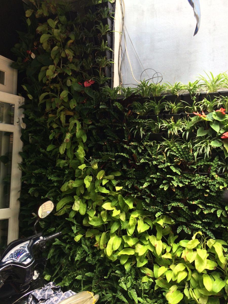vườn tường xnah tạo nên không gian xanh