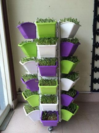 Giàn trồng rau QA-01A36 được nhiều người yêu thích sử dụng