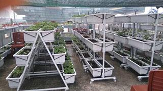 Kệ trồng rau di động tam giác