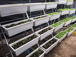 Giàn trồng rau QA-04A16