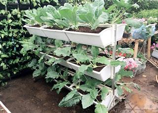 Giàn trồng rau di dộng QA-04A18.