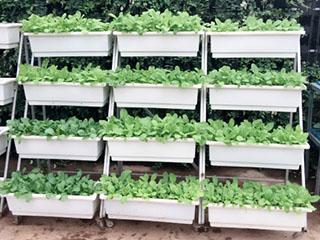 Kệ trồng rau di động 4 tầng 4 chậu