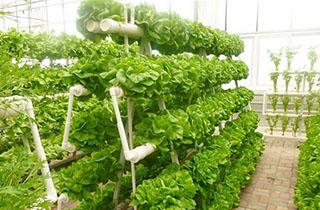 Giàn trồng rau thông minh tại TP HCM