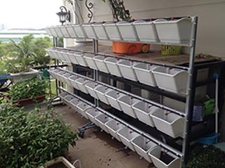 Giàn trồng rau 4 tầng