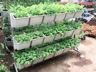 Giàn trồng rau 36 chậu (hai mặt)