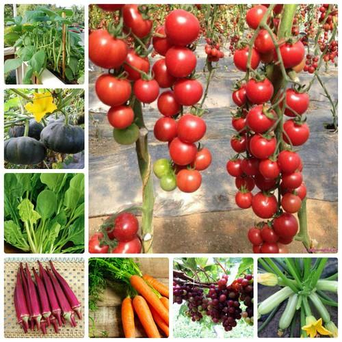 Quang Anh HCM có vô số hạt giống rau cho các bạn lựa chọn, đồng giá 10,000/gói
