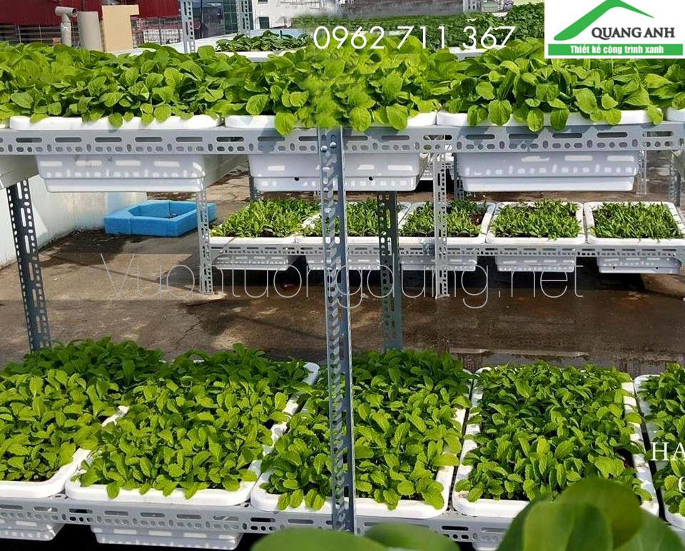 Quang Anh HCM Nhận làm giàn trồng rau bằng sắt V theo yêu cầu khách hàng
