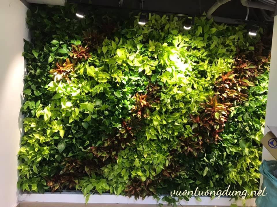 Thiết kế vườn trên tường Bạch Đằng – Tân Bình