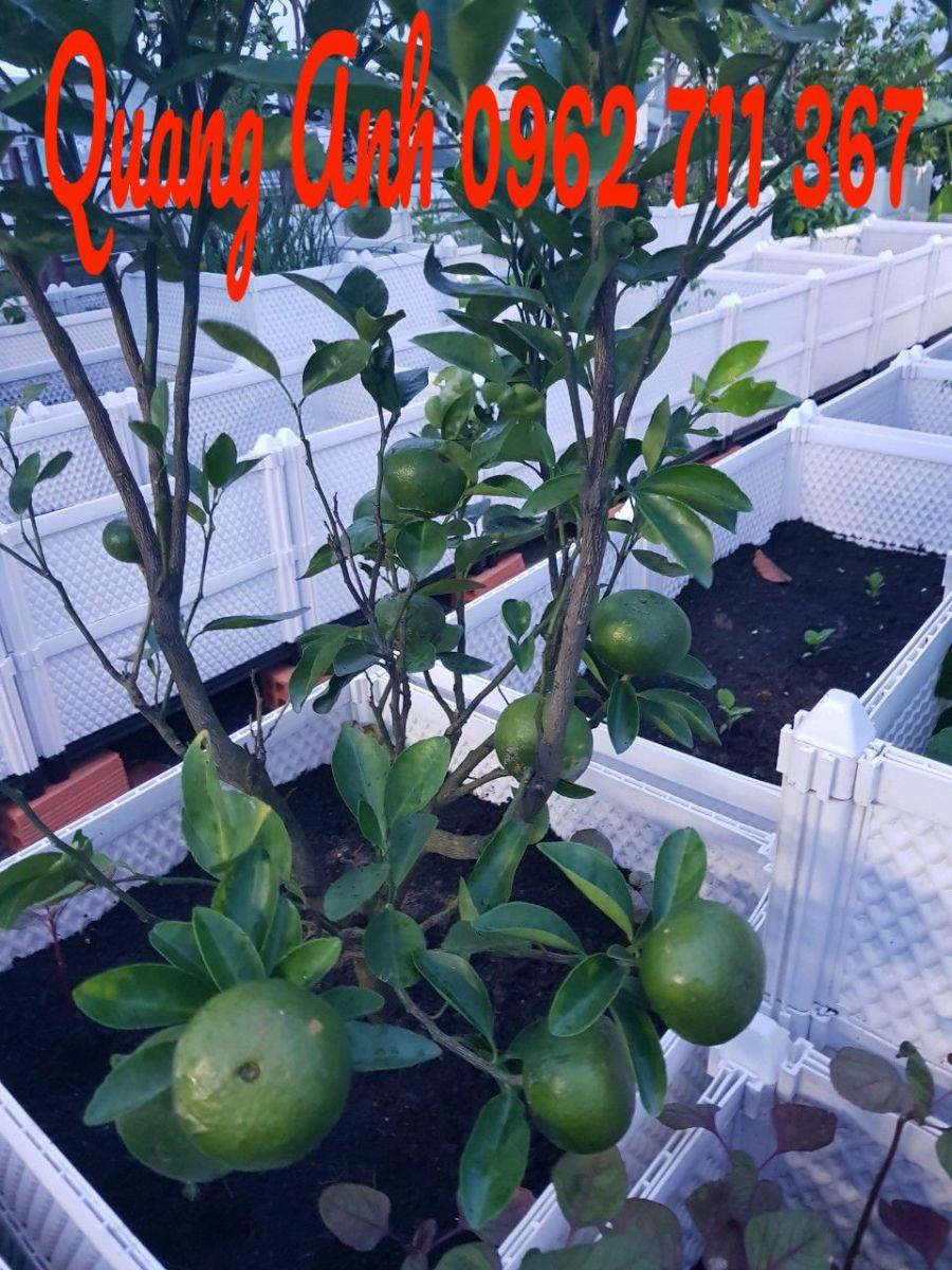 trồng rau sạch với chậu nhựa