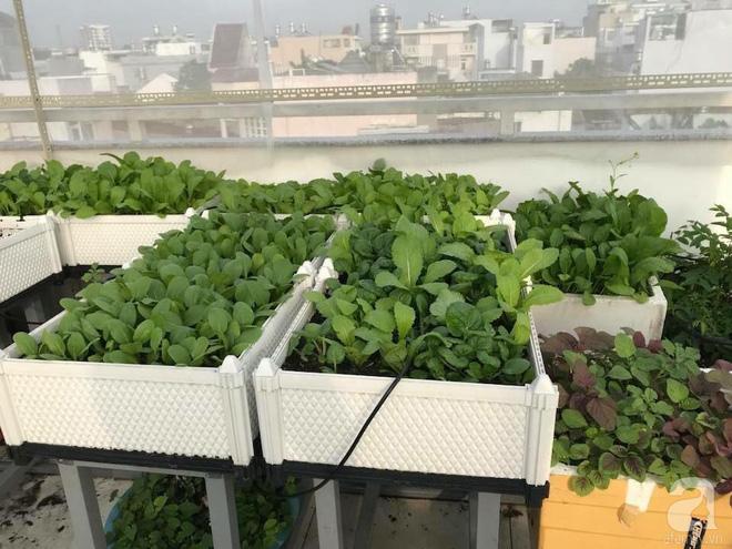 kệ đỡ khay trồng rau hcm