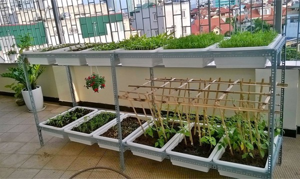 Kệ trồng rau sạch tphcm