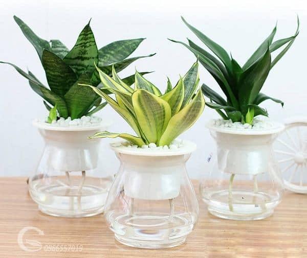 Các loài cây phong thủy nên trồng trên vườn tường