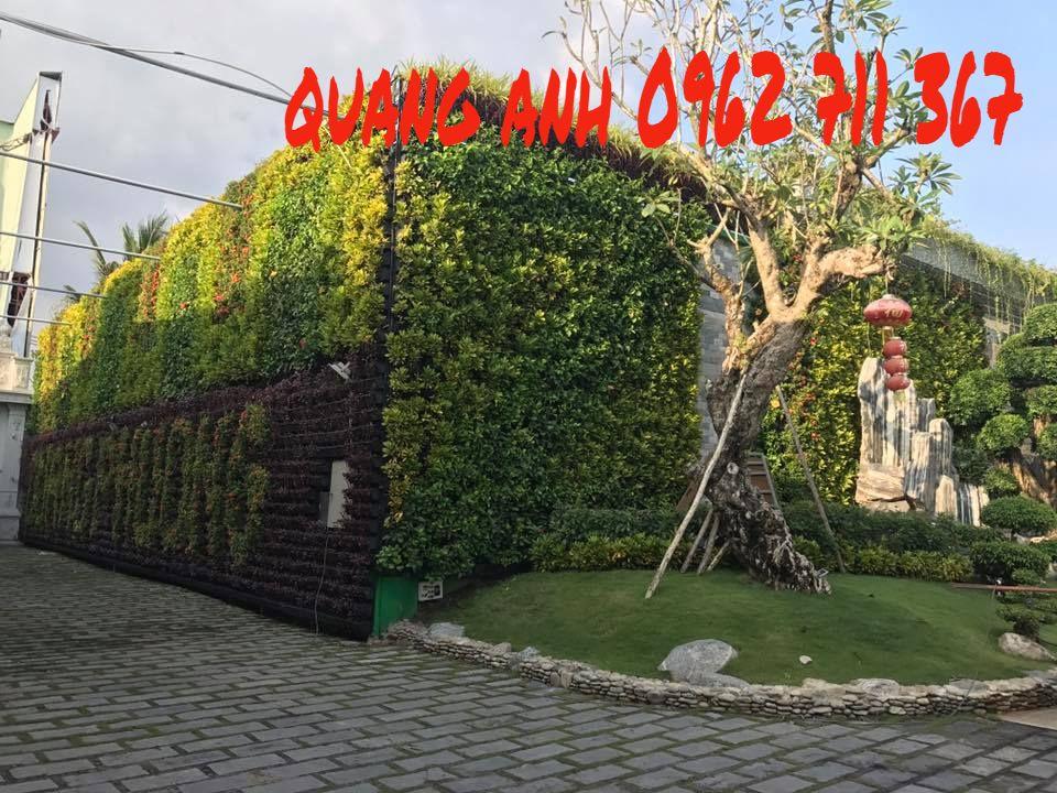 vườn tường