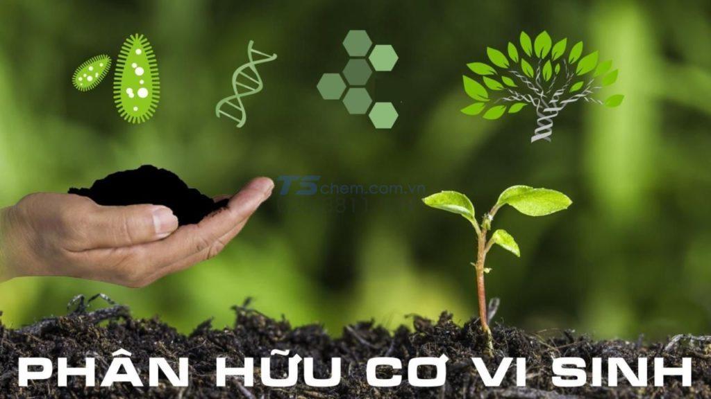 Bón phân hữu cơ vi sinh giúp cây phát triển tốt và không gây ô nhiễm không khí.