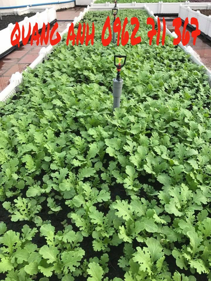 vườn rau sạch với chậu ghép thông minh