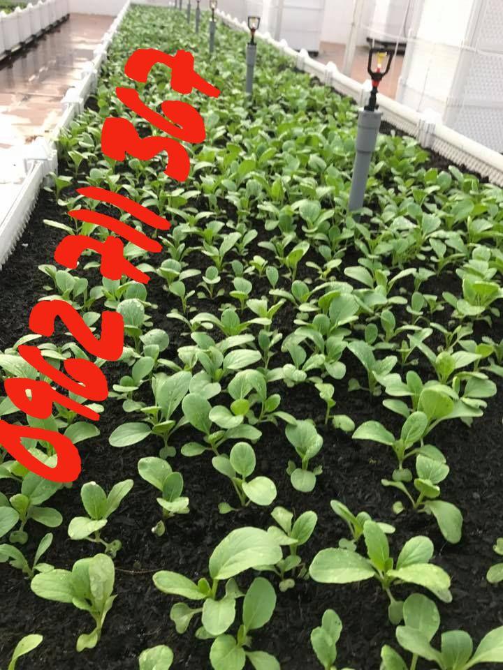 thiết kế vườn rau sạch