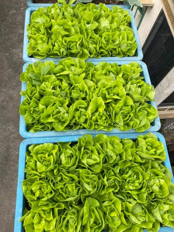 Quang Anh HCM chuyên thi công vườn rau sạch tại nhà giá rẻ, chất lượng