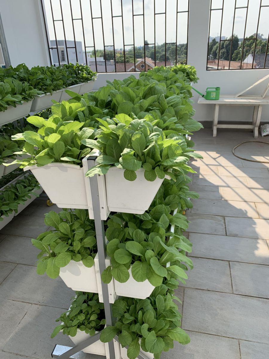 Giàn trồng rau di động giá rẻ Quang Anh HCM