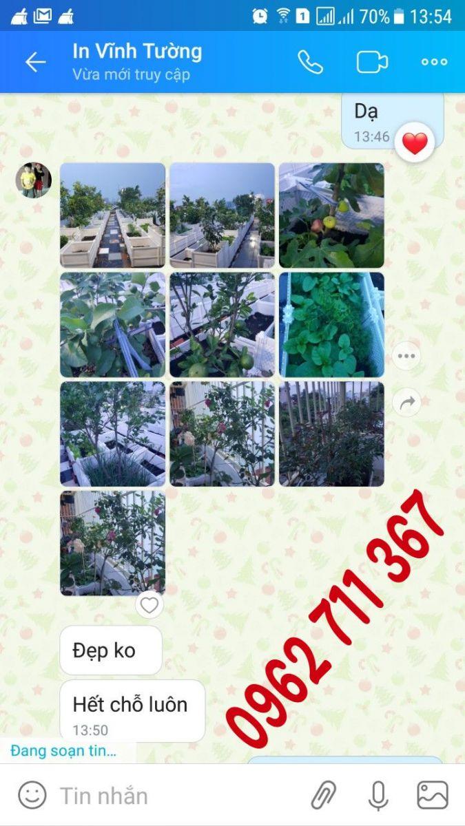 10 lí do trồng cây tại nhà
