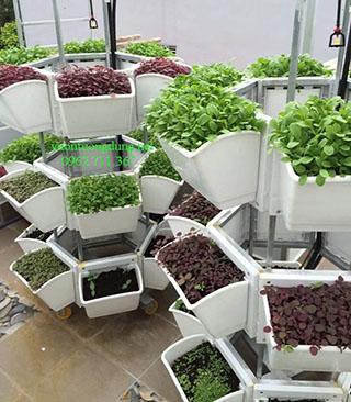 Kệ trồng rau lục giác