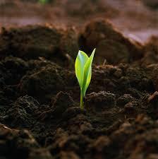 đất tribat trồng rau tại hcm