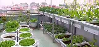 Quang Anh HCM chuyên thi công vườn rau sạch tại nhà uy tín, chất lượng
