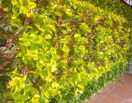 cây mà bạn có thể trồng trong nhà