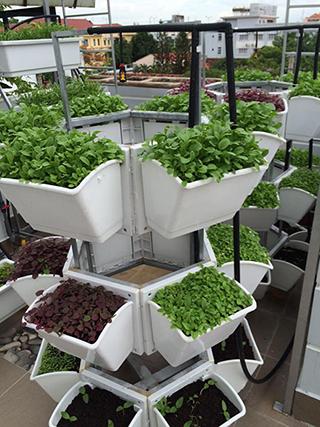 giàn trồng rau sạch hcm