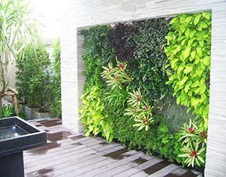 công trình vườn tường đứng của công ty Quang Anh HCM