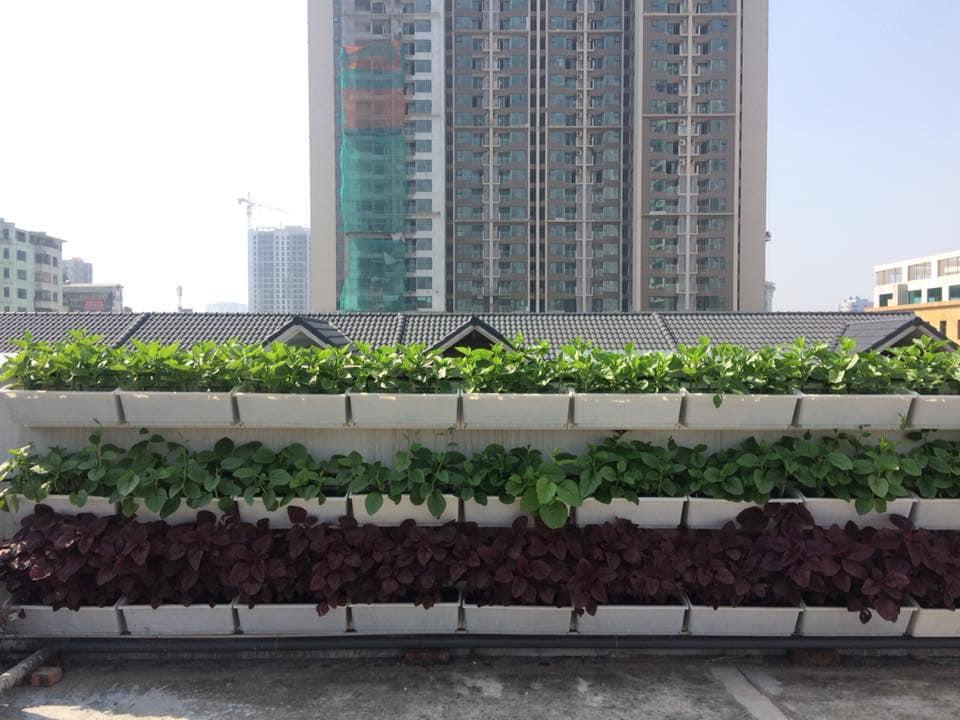 Quang Anh HCM chuyên thi công vườn rau sạch tại nhà giá rẻ, uy tín nhất Việt Nam
