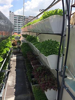 giàn trồng rau thông minh tại tphcm