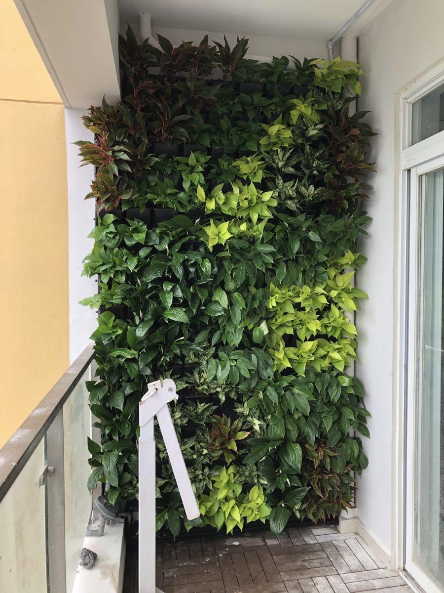 Quang Anh HCM chuyên thi công vườn tường đứng đẹp, chuyên nghiệp, giá rẻ