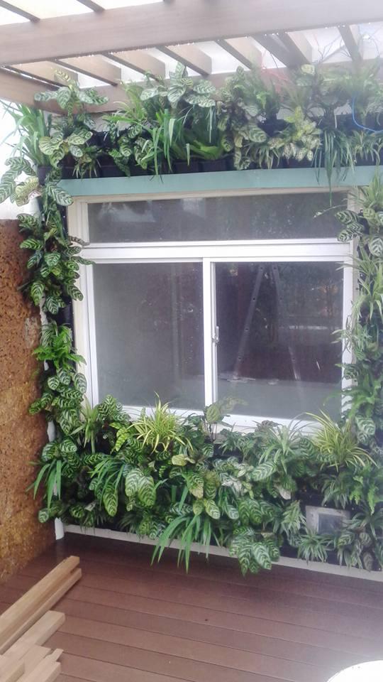 Thiết kế tường cây xanh đẹp và hài hòa với ngôi nhà của bạn đẹp nhất tại TPHCM-Công Ty Quang Anh