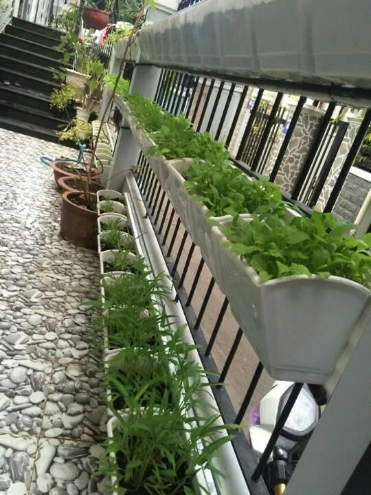 Trồng rau ốp tường với modul QA-03-04 công ty Quang Anh HCM: vườn rau độc đáo đầy tiện ích!