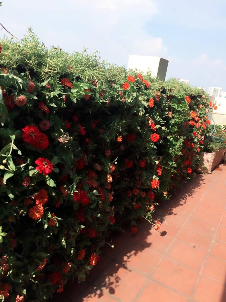 Quang Anh-Địa chỉ thi công tường cây trong nhà đẹp và giá rẻ tại tphcm