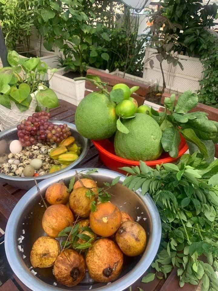 Lợi ích của việc trồng rau sạch tại nhà
