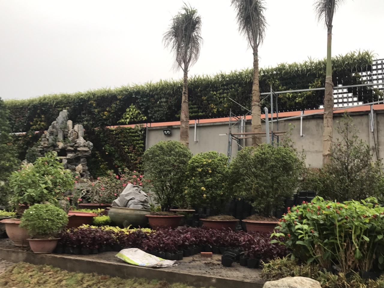 Thiết kế tường cây trong nhà uy tín và giá rẻ tphcm-Công ty Quang Anh