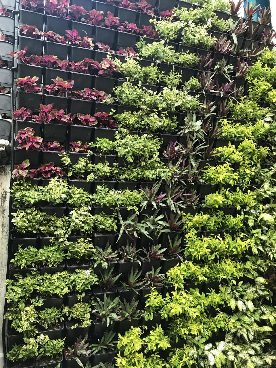 Quang Anh HCM - trồng cây, làm vườn tường đứng ủng hộ đồng bào miền Trung sau bão lũ!