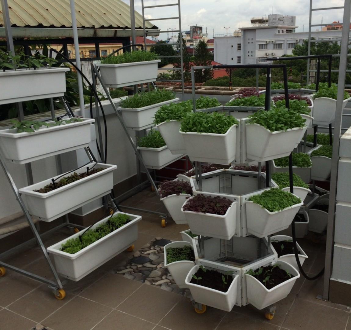 Địa chỉ thiết kế vườn rau trên sân thượng đẹp và phù hợp nhất với không gian nhà bạn