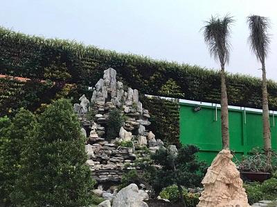 Tác dụng tuyệt vời của vườn tường đứng