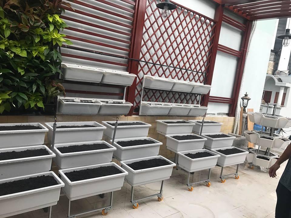 Vườn rau sạch trên sân thượng với giàn kệ trồng rau Quang Anh