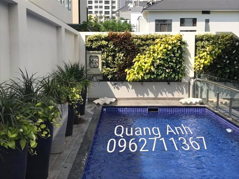 Vườn tường đứng Quang Anh TPHCM – Giải pháp không gian xanh nhanh nhất, hiệu quả nhất!