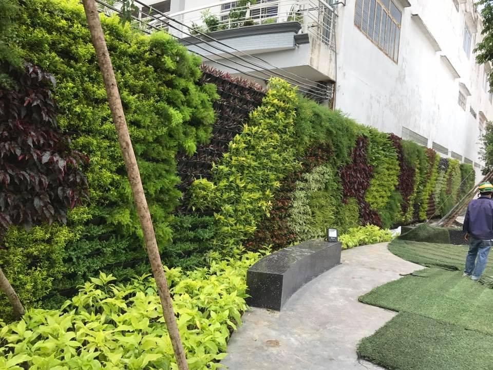 Thiết kế trang trí mảng vườn tường thẳng đứng
