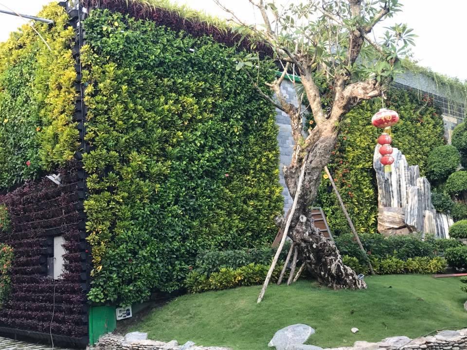 Gía thi công trồng cây treo tường Quang Anh HCM