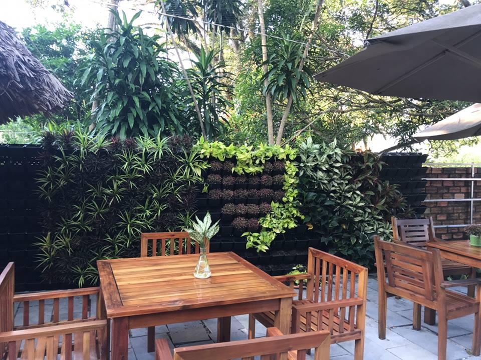 Top 7 loại cây được yêu thích nhất để thiết kế vườn trên tường