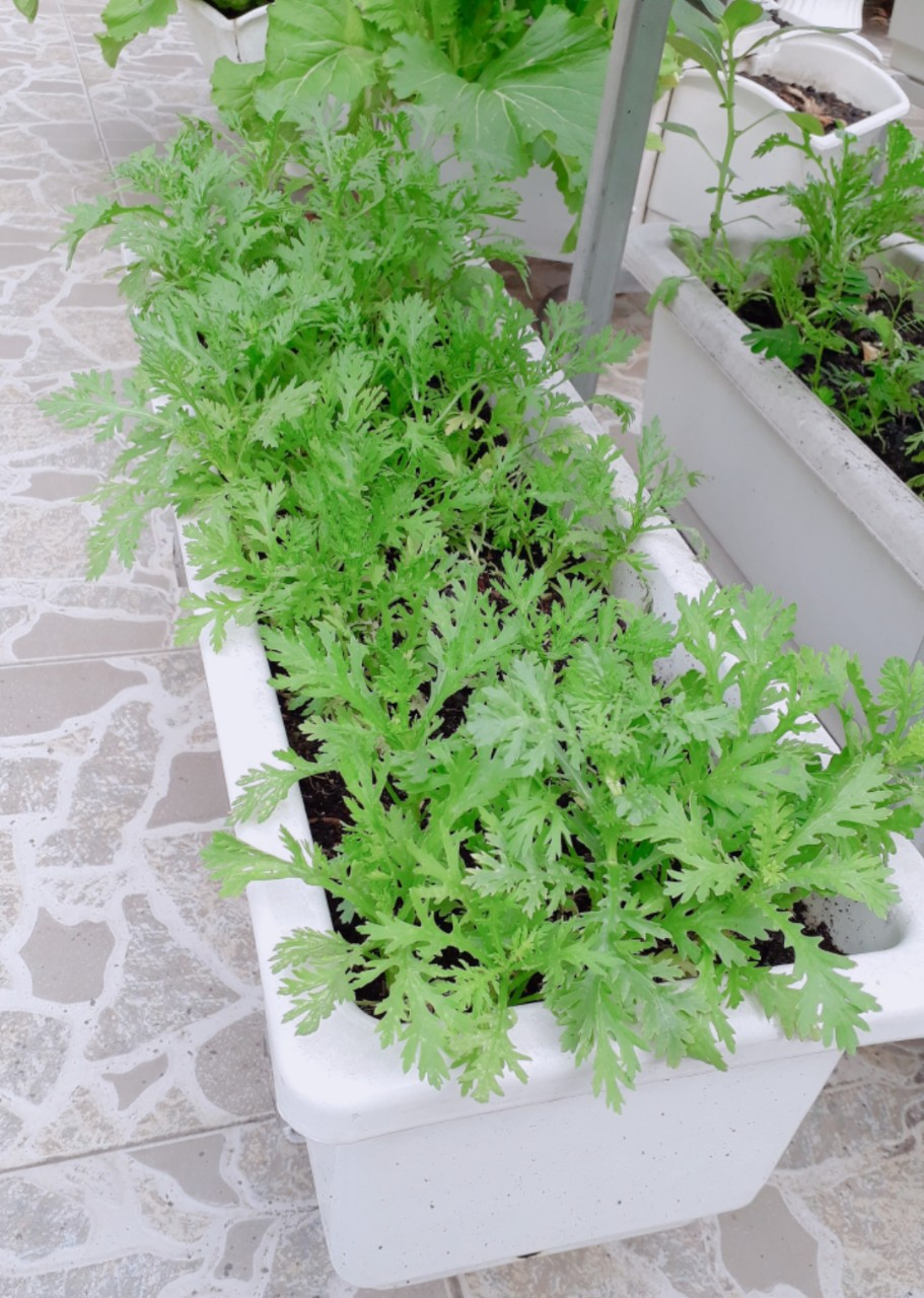 Địa chỉ chuyên thiết kế mô hình vườn rau sạch tại nhà hiệu quả nhất-Công ty Quang Anh