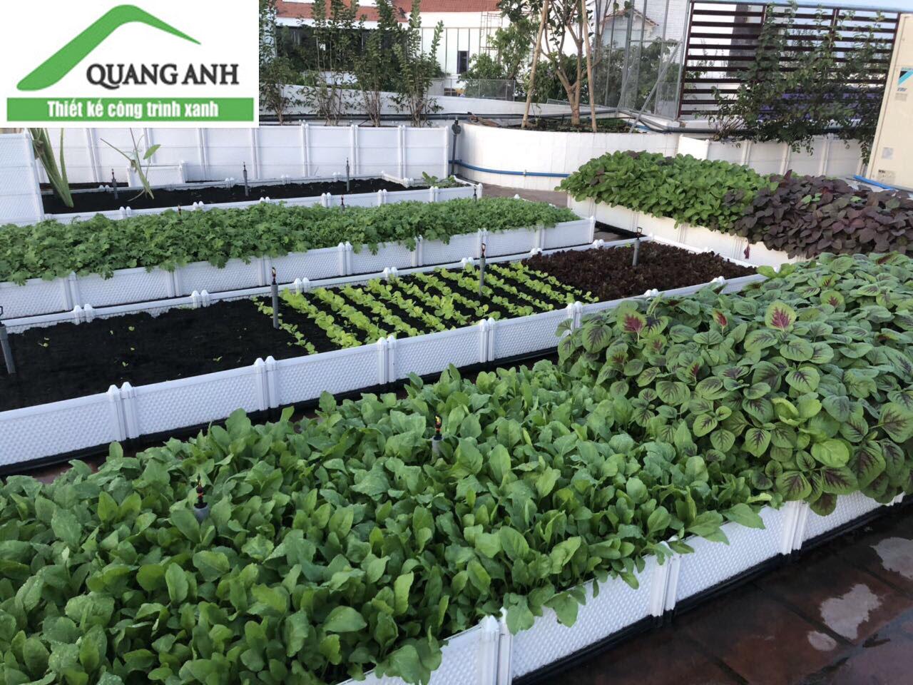 Chậu trồng rau thông minh cho mọi nhà
