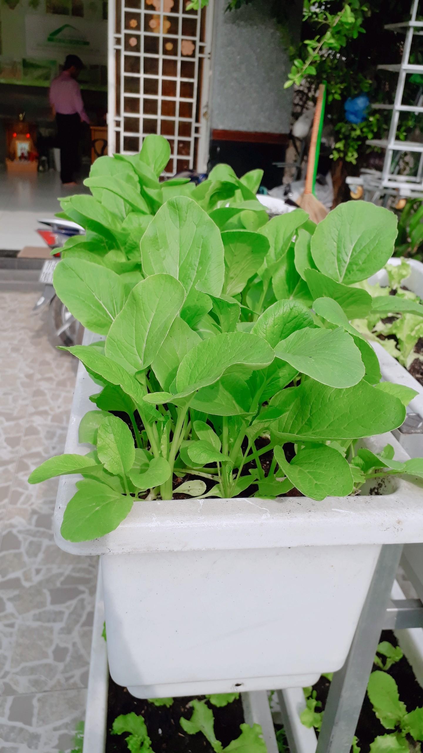 Cách trồng rau sạch mới nhất-Phương pháp để đạt hiệu quả nhất