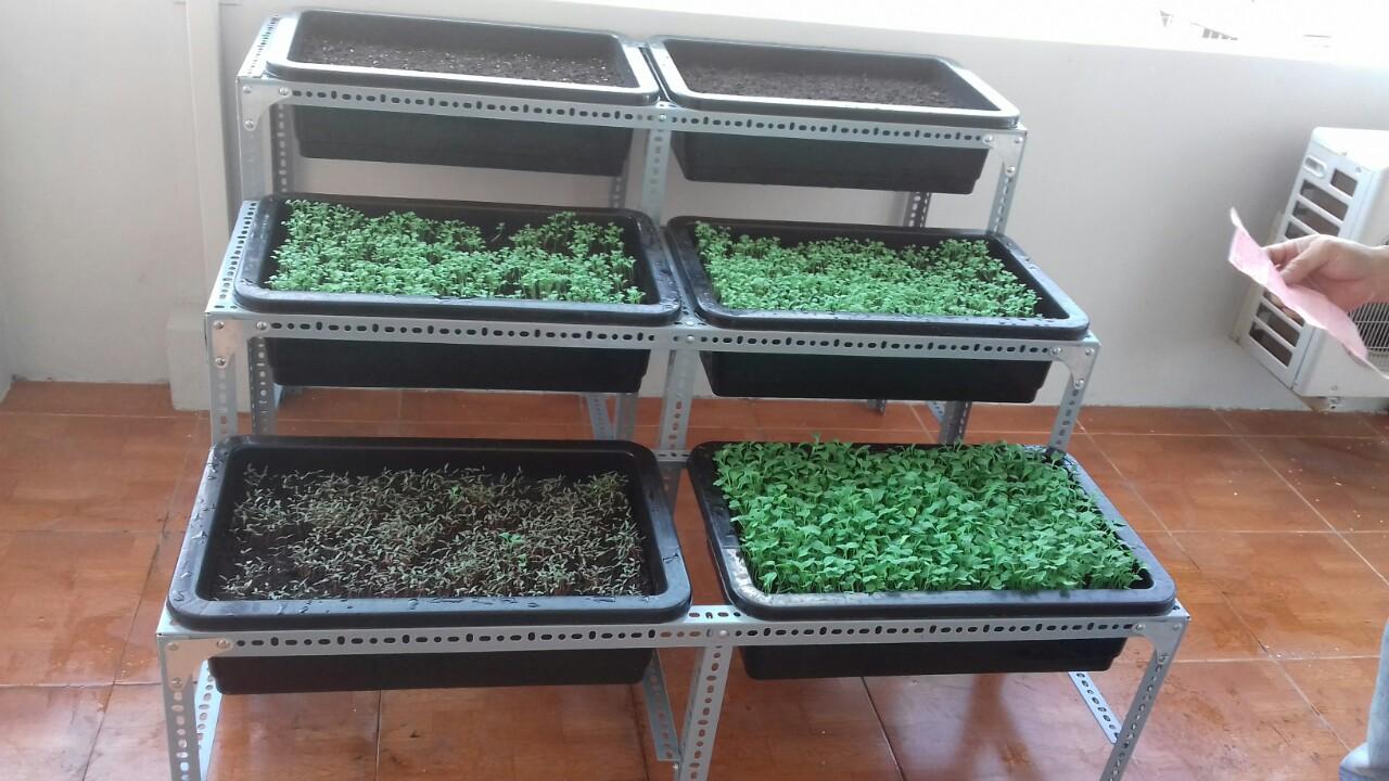 Thi công vườn rau sạch tại nhà với giàn kệ sắt V